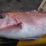 玄海灘小呂島周辺で鯛ラバ&ジギングに行ってきた!乗っ込みまではもう少し??