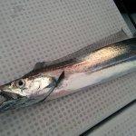 太刀魚対策におすすめ!太刀魚ジギングでラインブレイクを激減させる簡単な方法。