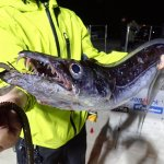 目指せ指10本サイズ!琉球の巨大太刀魚「オキナワオオタチ」を求めて沖縄へ行ってきた!
