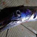 沖縄へ太刀魚を釣りに行く時に読む記事。ベストシーズンは?いくらかかった?魚を持って帰るには?などを解説。