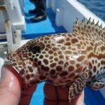 沖縄でボートライトキャスティングに挑戦!目指す獲物は強烈な引きのタマン(ハマフエフキ)!
