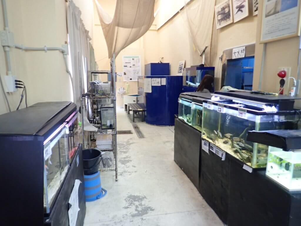 やながわ有明海水族館