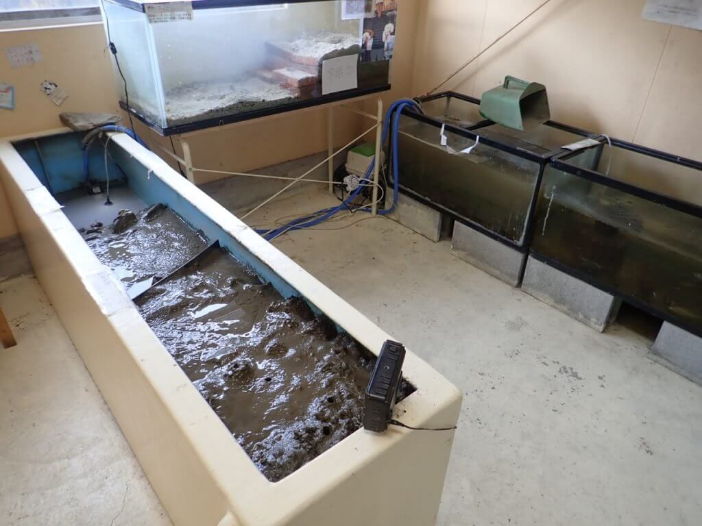 やながわ有明海水族館の干潟の展示