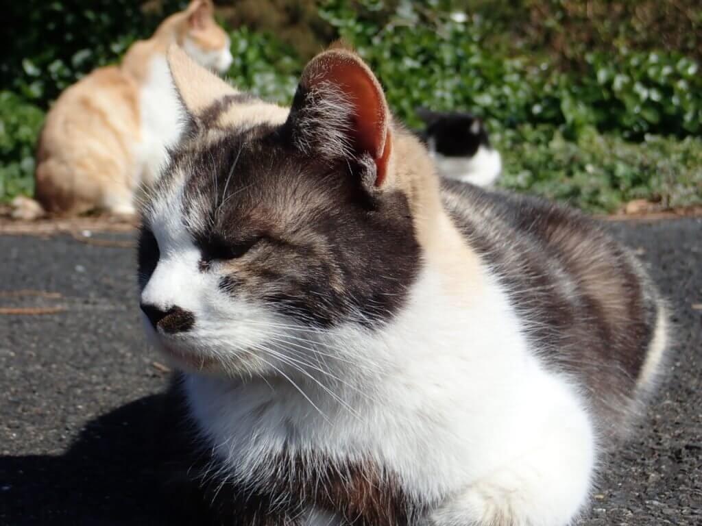 日向ぼっこしていた猫達