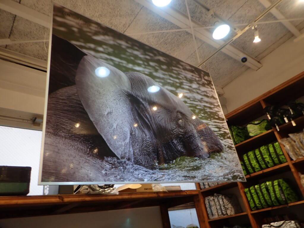 店内で最も目を引く象の写真