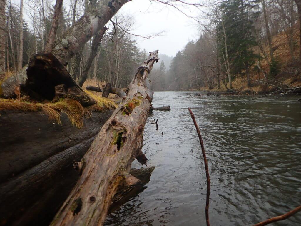 倒木がたくさんある川