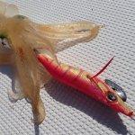 イカメタルには手持ちのエギを使うのがコスパ高し!格安のエギ&メタルスッテで美味しいイカを釣る!