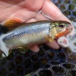 日田へ渓流釣りに行ってきた!福岡市内からアクセス良く、気軽に渓流釣りが楽しめる!