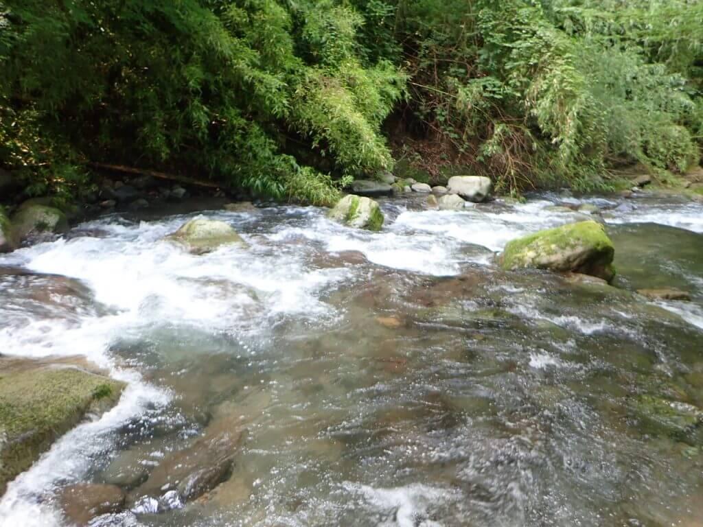 前日の雨で増水した川
