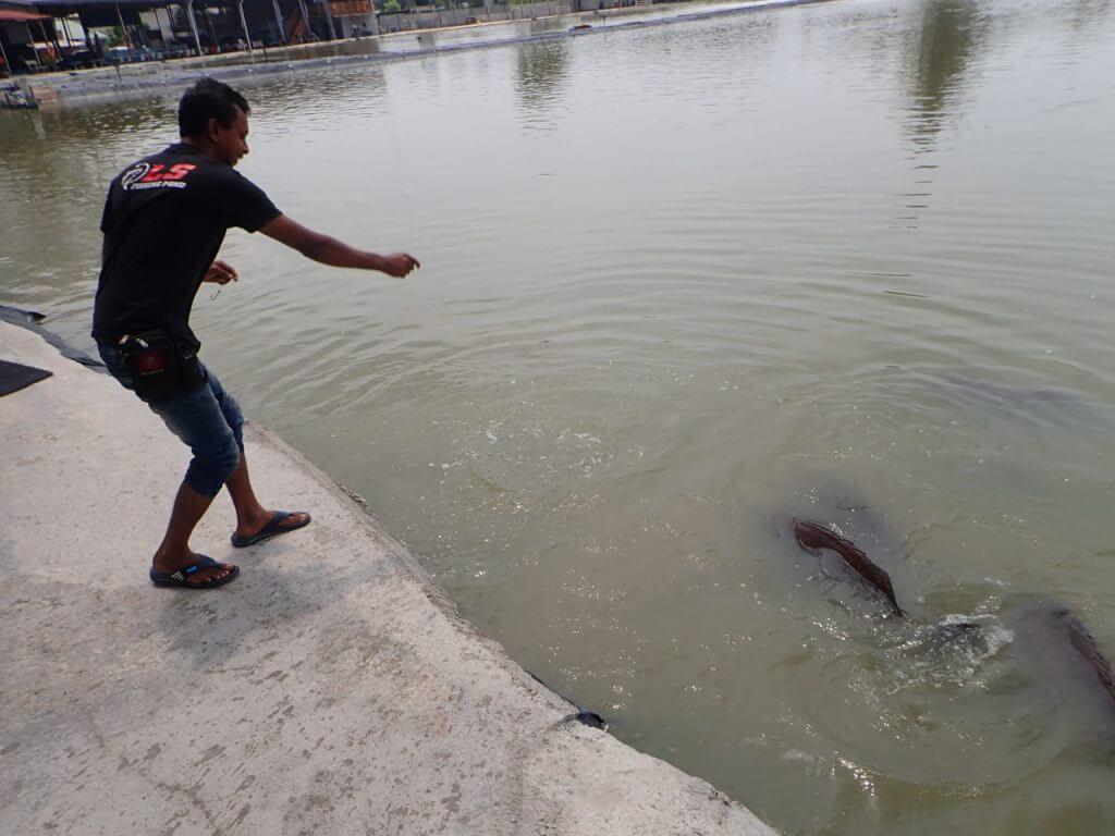 水面に餌を叩きつけるスタッフ