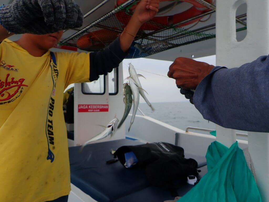 餌となる小魚をサビキで釣る