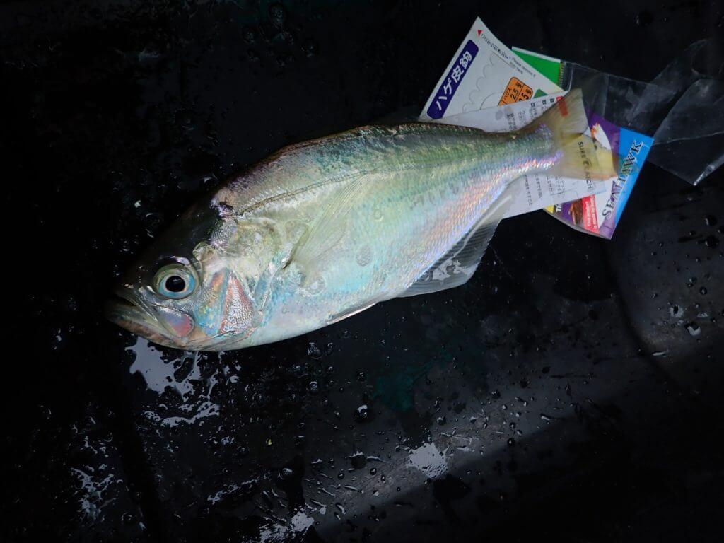 この魚は美味しいらしい