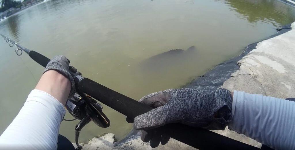 足元に浮かぶ大きな魚影