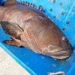 マレーシアの巨大魚釣り堀「LS Fishing Pond」。100kg超えのグルーパーが狙えるぞ!