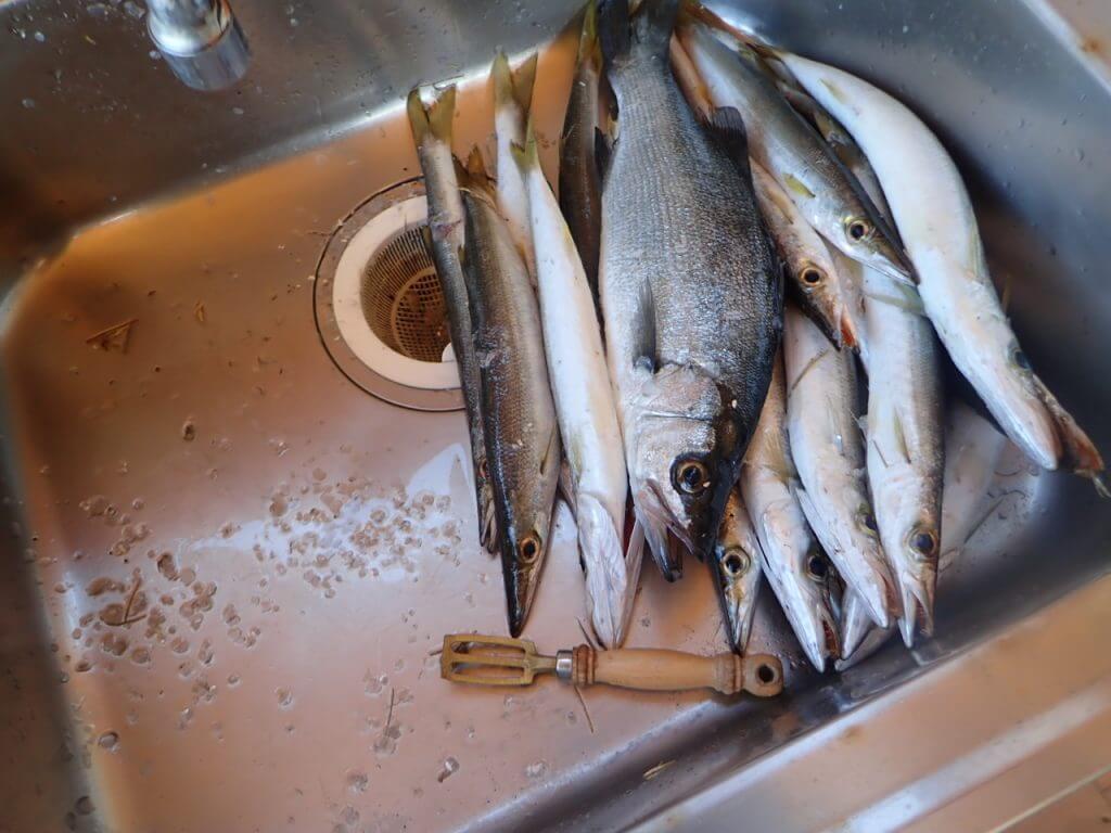 釣れた魚を下処理