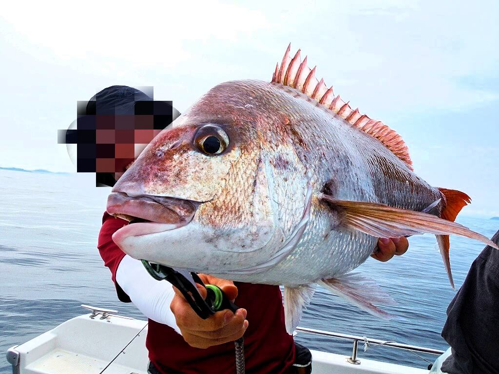 スルメデスで釣れた70cm程の良型真鯛