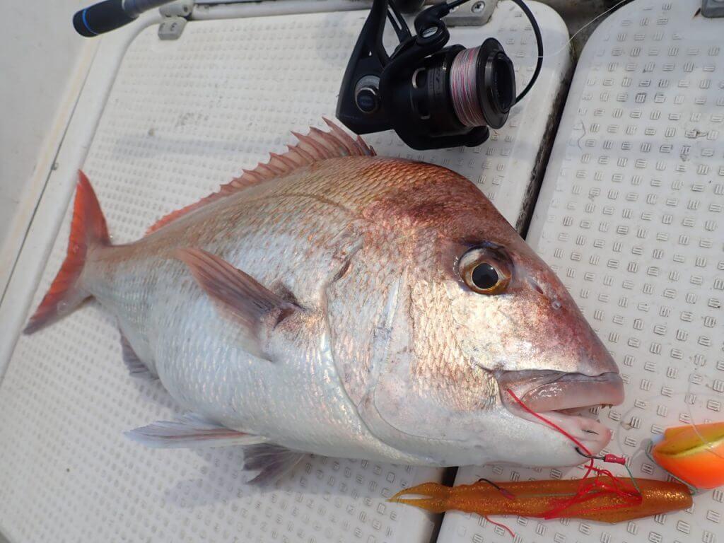 スピニングロッドで釣れた真鯛