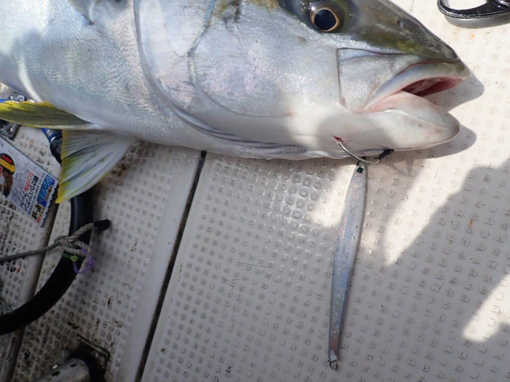 ジグパラロングで釣れたメーター超えのヒラマサ