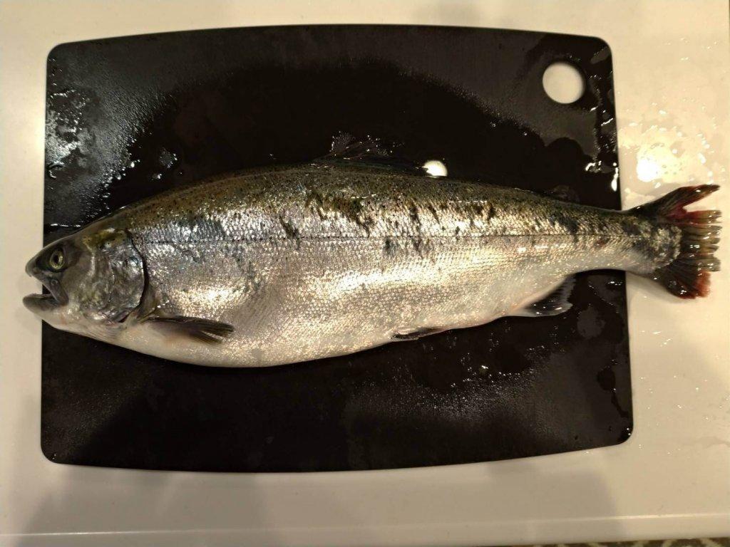 釣り仲間が九州の海で釣りあげたトラウト