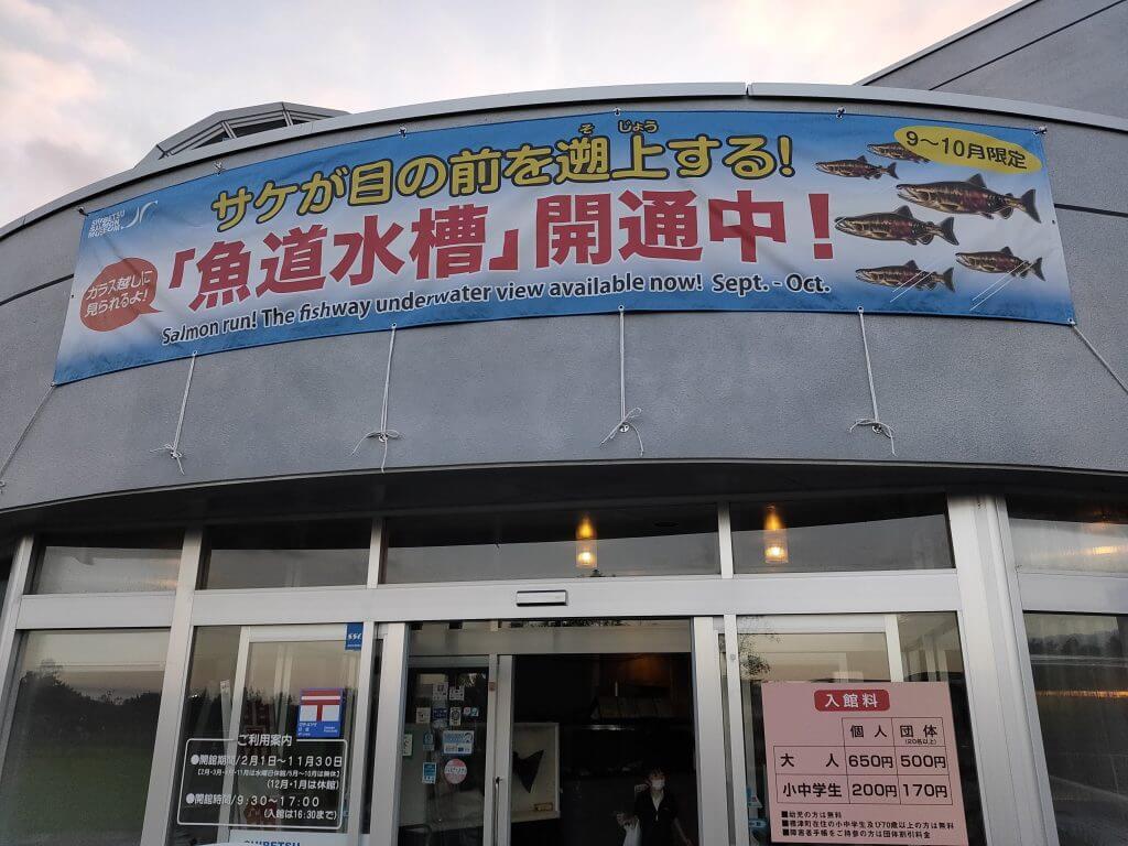 鮭の遡上シーズンに訪れたサーモン科学館